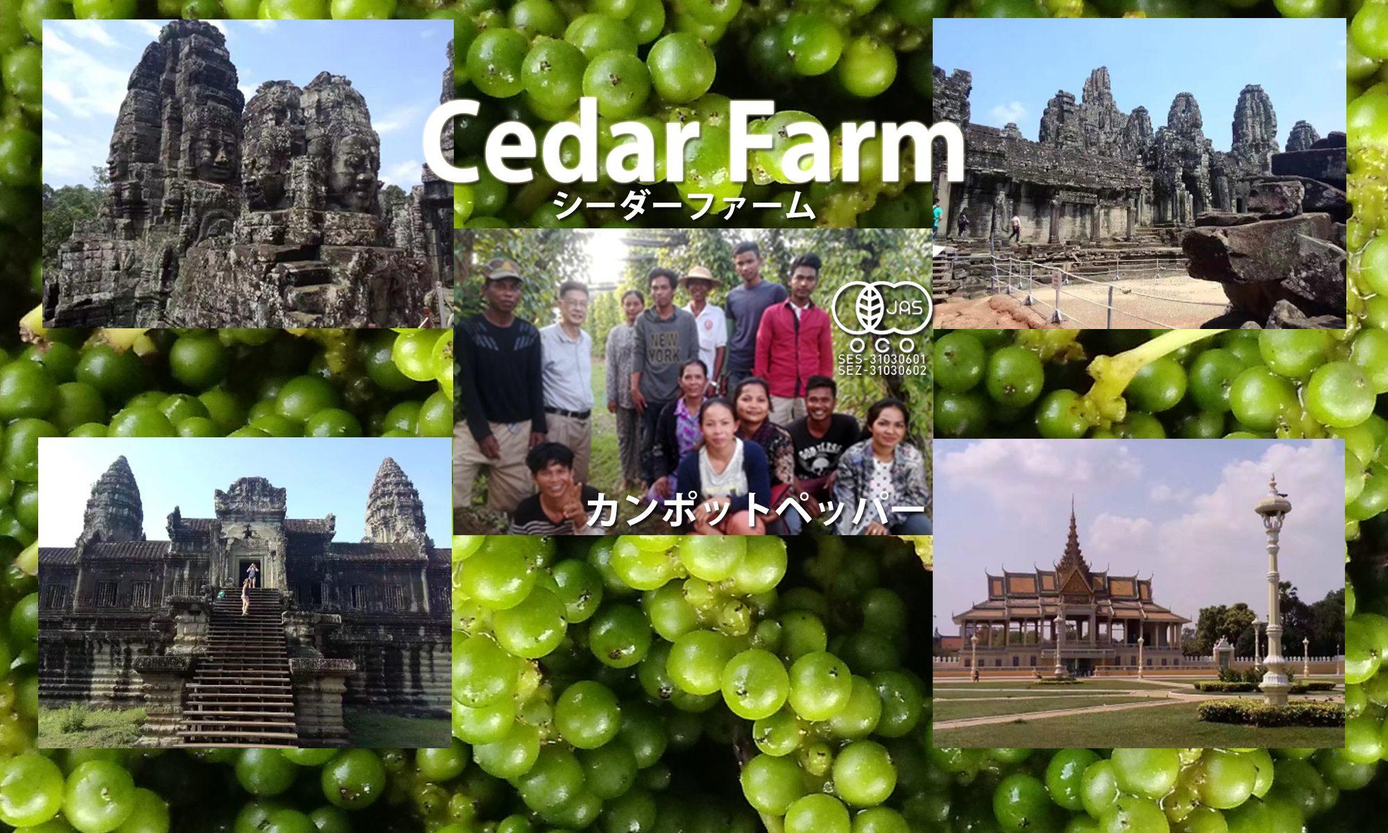 オーガニック胡椒のお求めは「Cedar Farm」